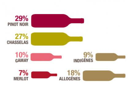 그림1 )스위스 포도 품종별 생산비율