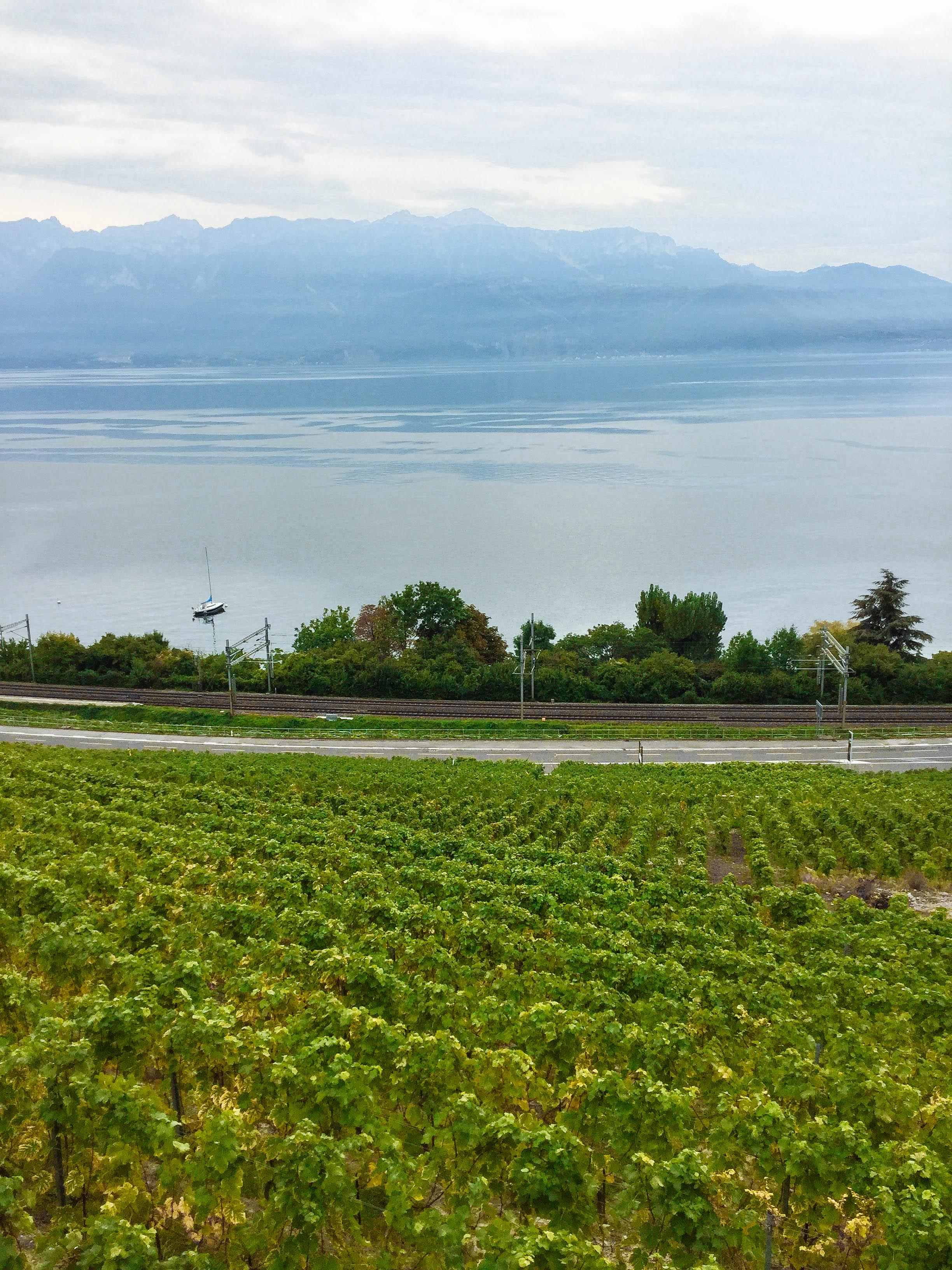 사진1) 스위스 와인 산지 전경