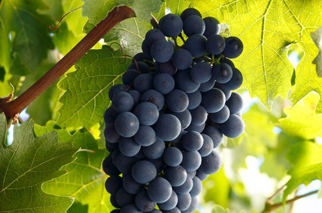 cabernet-sauvignon-quiz-630x417